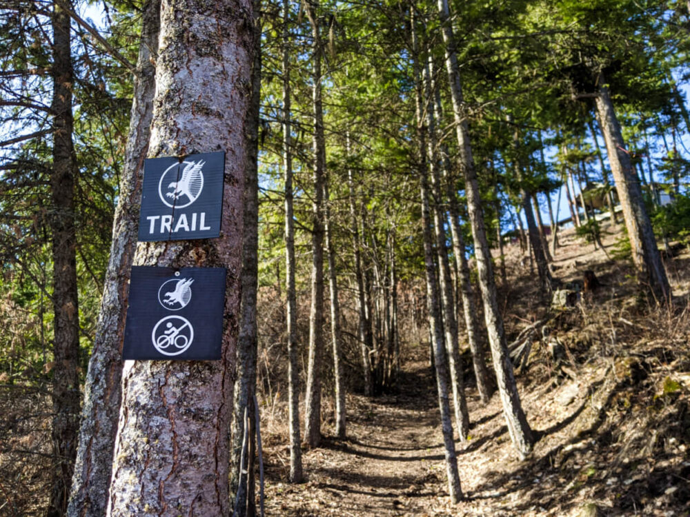 Hiking trail leading uphill, lined by small trees, one of which (close to camera) has a Predator Ridge trail sign with no bike symbol