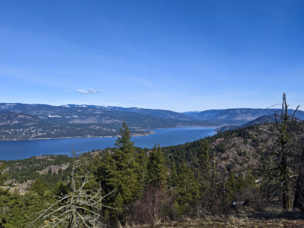 Looking over sparse trees from ridge towards Okanagan Lake below, which is surrounded by rolling hills