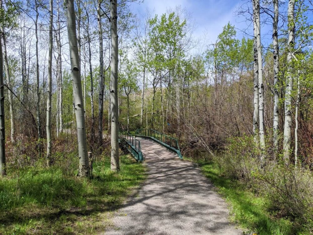 Looking towards path and bridge surrounded by forest, leading to interpretive area in Lundbom Grasslands