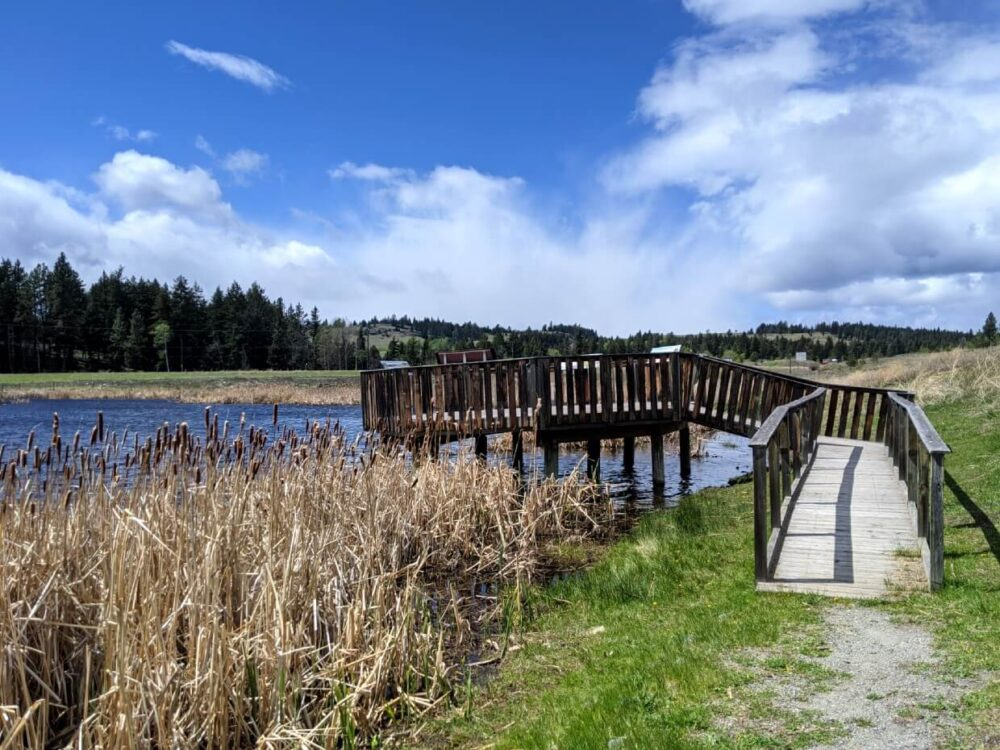 Looking towards wooden platform on small pond, with interpretive signage