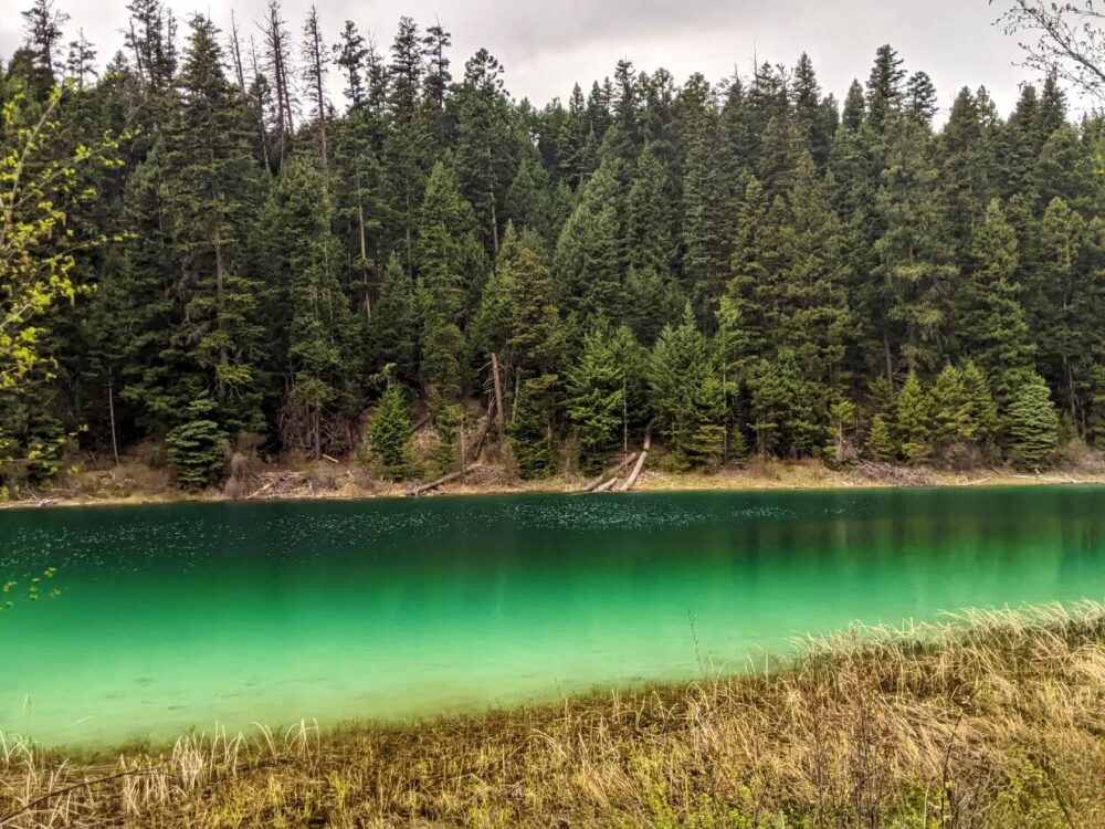 View across narrow forested lake, which displays deep emerald colours on the water surface