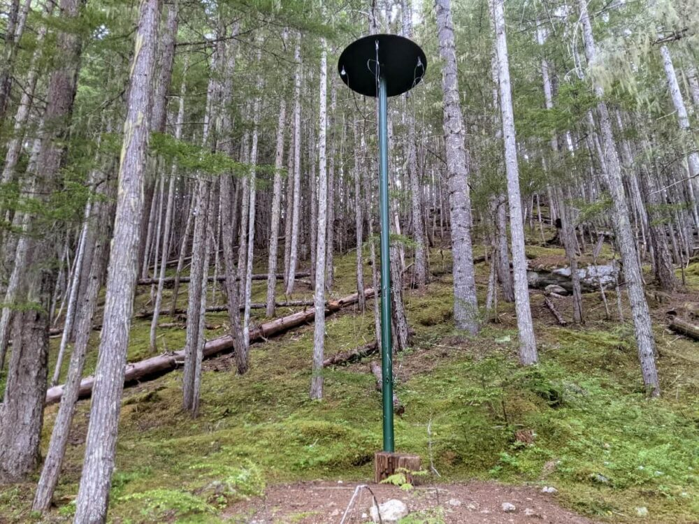 Looking up at metal bear hang with cables hanging off round top, set into forest at Spectrum Lake campground