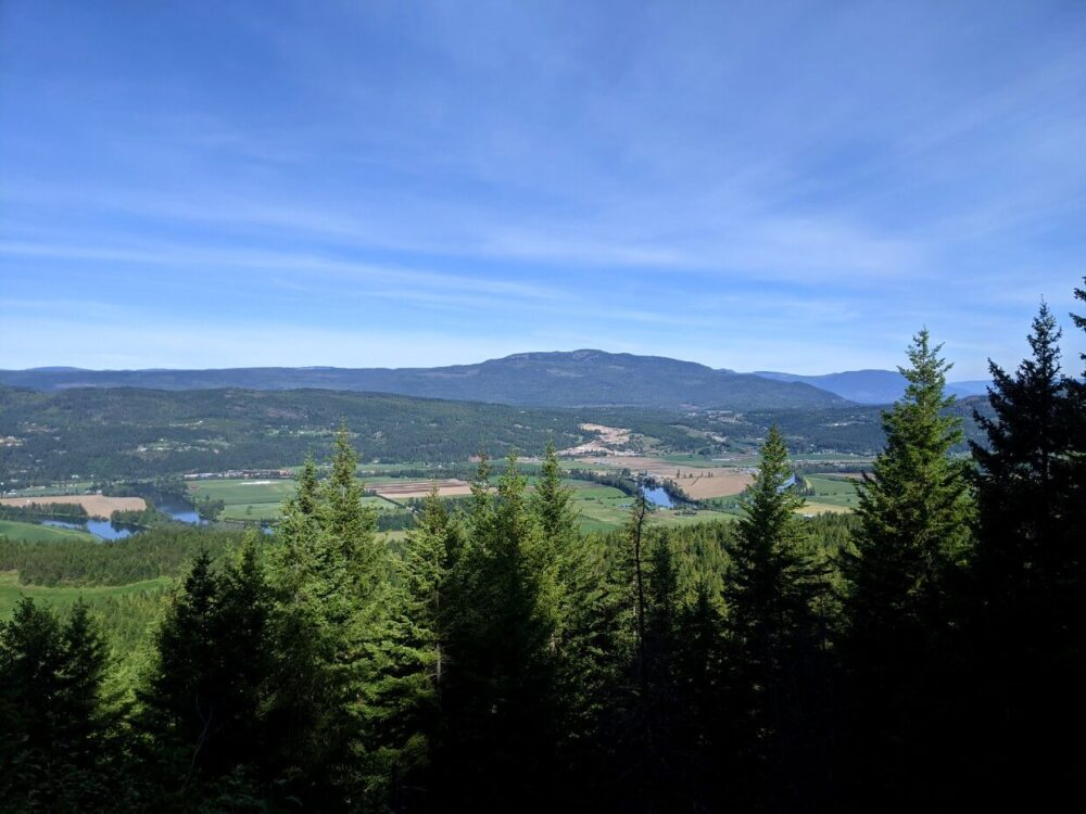 Looking out over the trees on the Enderby Cliffs Trail to see partial views of farmland below