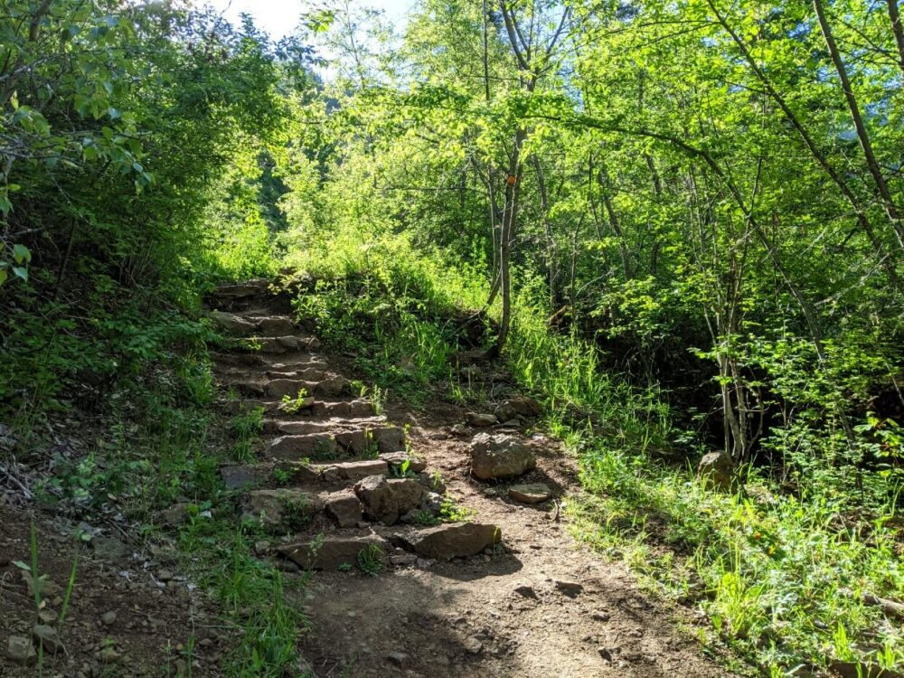 Part of the Enderby Cliffs Trail, with a dirt trail and rock steps leading up through forest