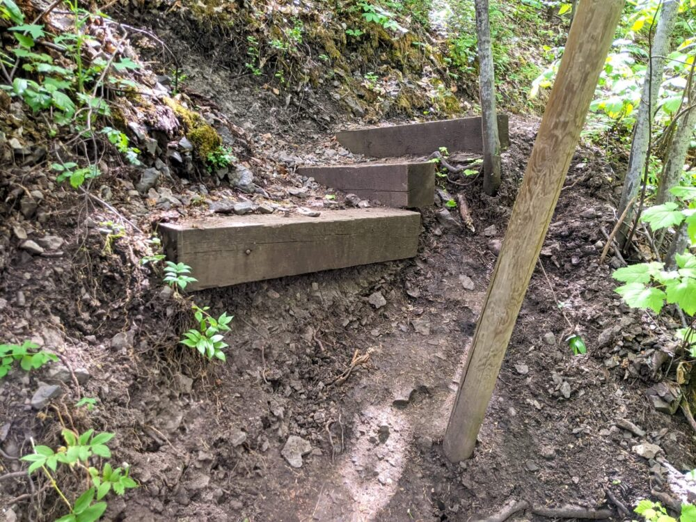 Close up of rugged wooden steps leading up to right hand side on Enderby Cliffs Trail