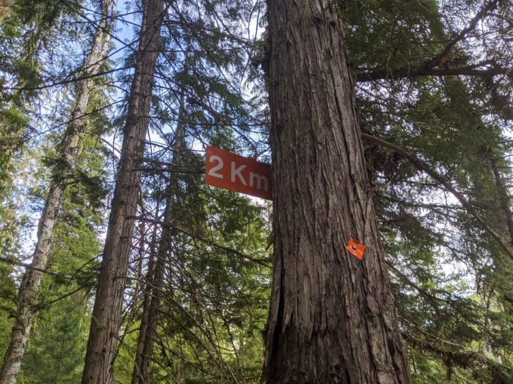 Looking up at tree with orange kilometre marker (2km) and orange diamond blaze