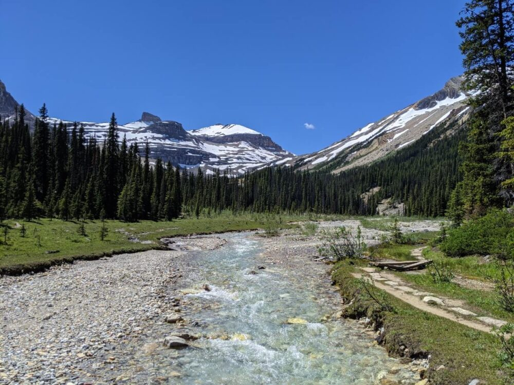 Bridge view of Little Yoho River rushing through forested valley, with snow capped mountains in the background