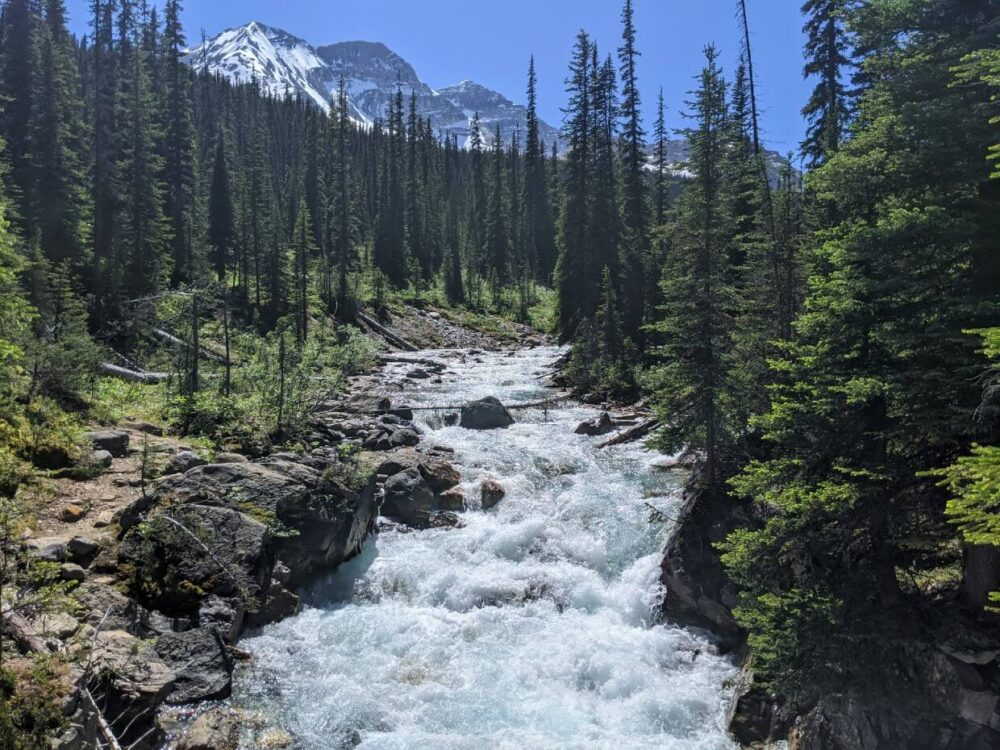 Front view of Little Yoho River rushing through forested valley, with snow capped mountains in the background