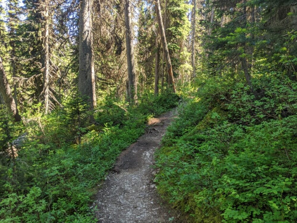 A hiking trail leads through forested area