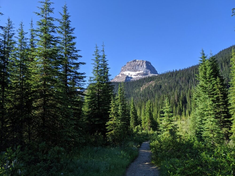 Hiking trail through forested area, with view of Wapta Mountain above the trees