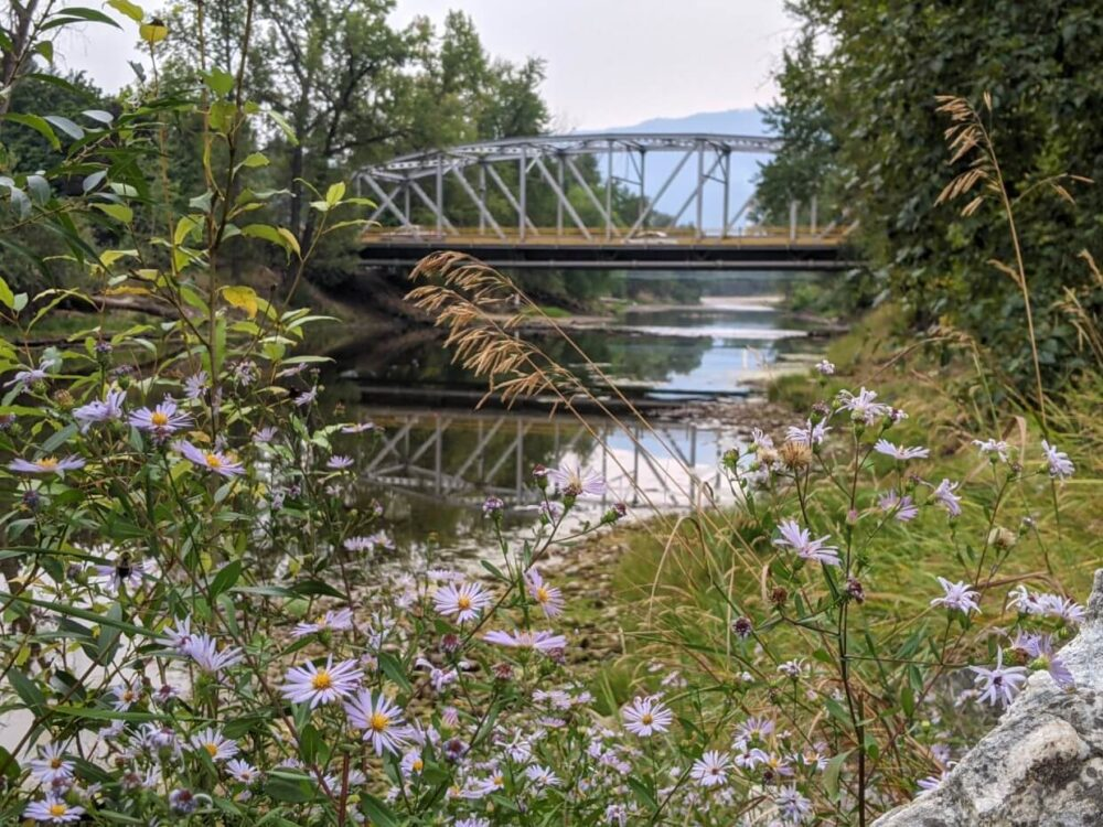 Looking across purple wildflowers to a bridge over the Granby River in Grand Forks
