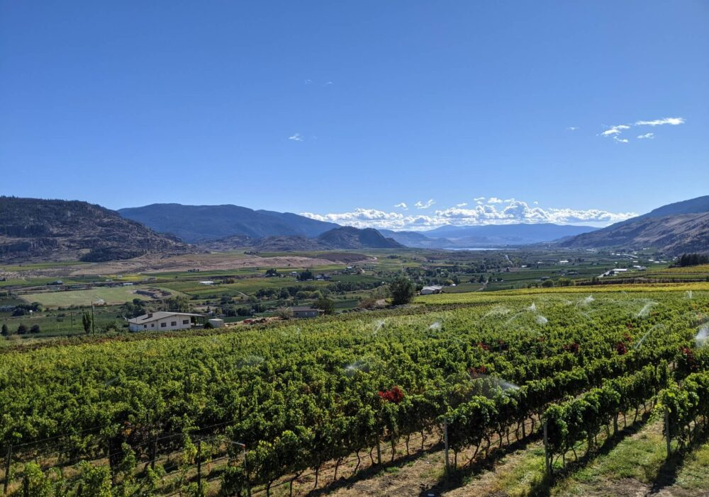 Looking across CheckMate's vineyards, with vines being watered and beautiful valley and lake views in background