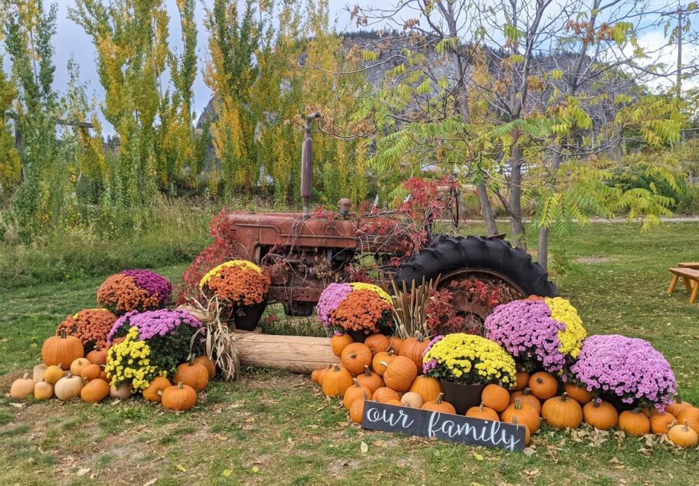 Fall decorations at Covert Farms, with old tractor covered in pumpkins and flowers