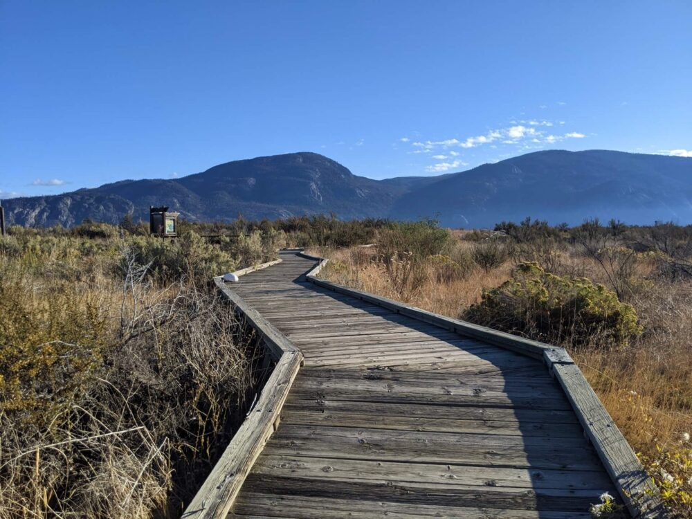 Low angle view of wooden boardwalk leading away from camera through desert landscape