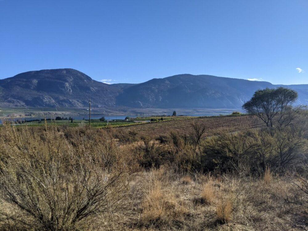View across desert landscape from boardwalk towards Osoyoos Lake and vineyards