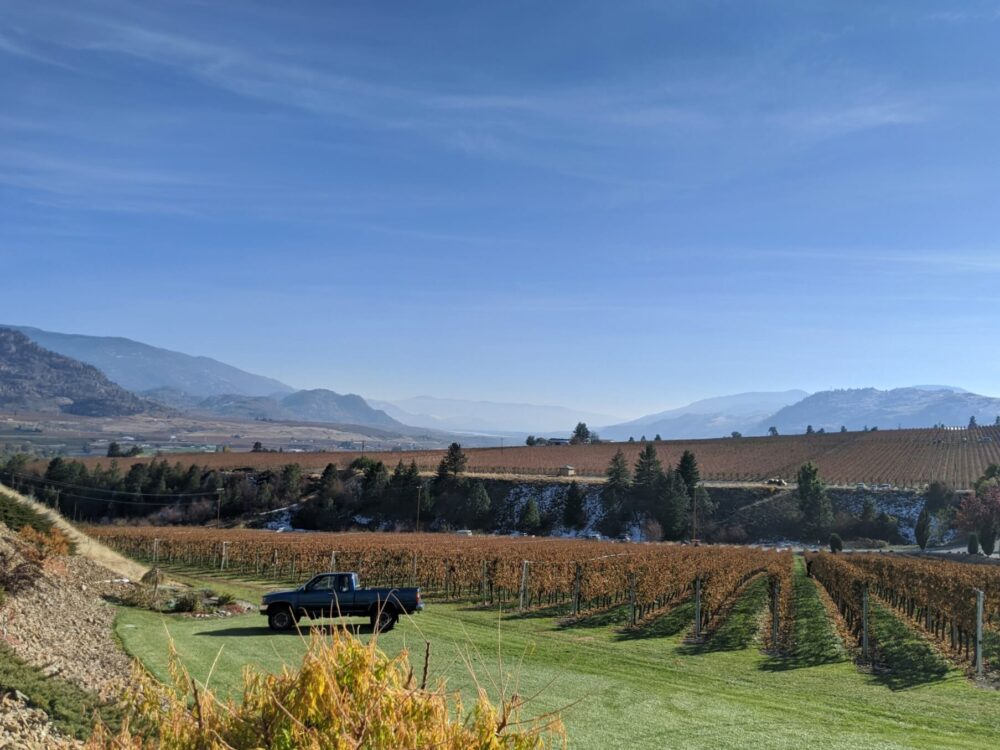 Looking down to brown coloured vineyards and rugged landscape in background