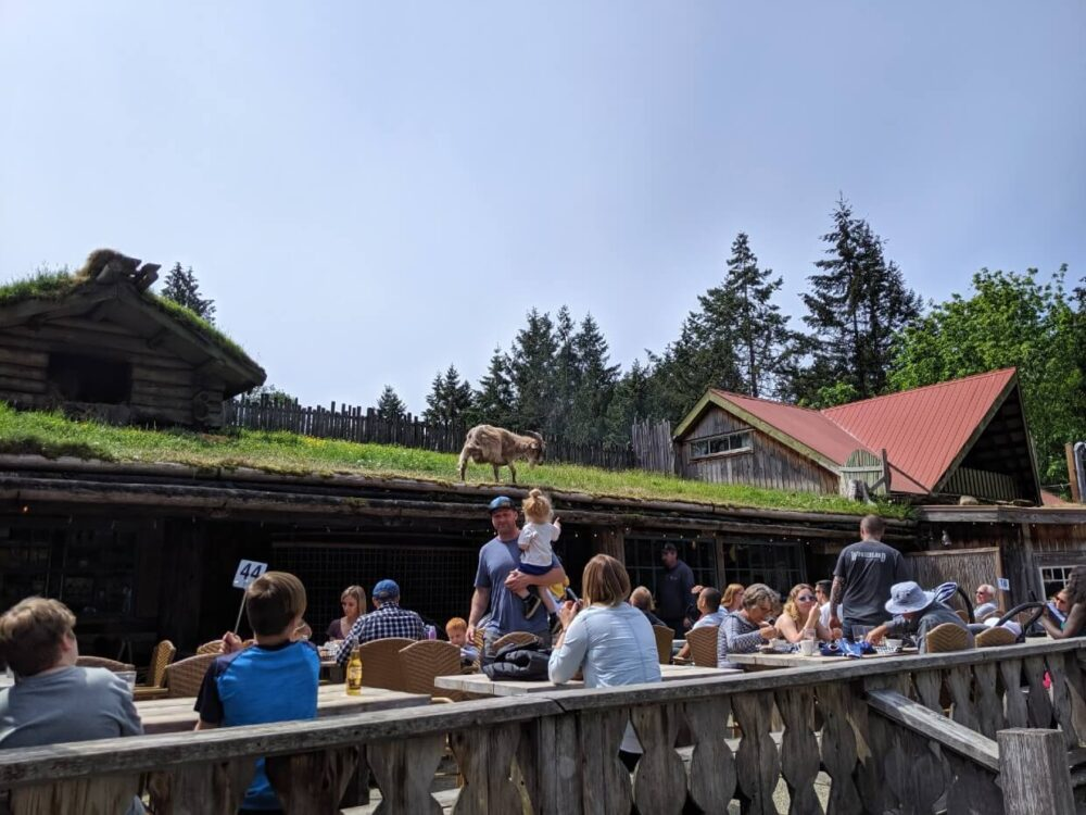 Looking over the fence to café area with one story building behind. The roof of the building is covered in grass and a goat walks away