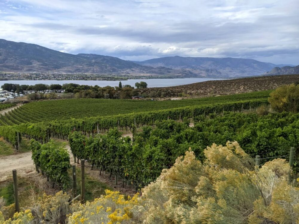 Looking across vineyards towards Osyoos Lake from elevated patio, with brown cloured hills in background