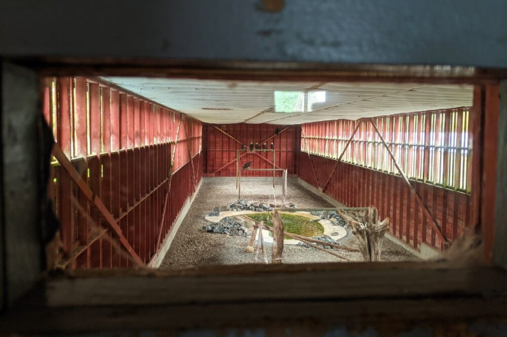 Peek through view of flying area at North Island Wildlife Recovery Centre - there are at least five birds of prey sat on a wooden stand at the end