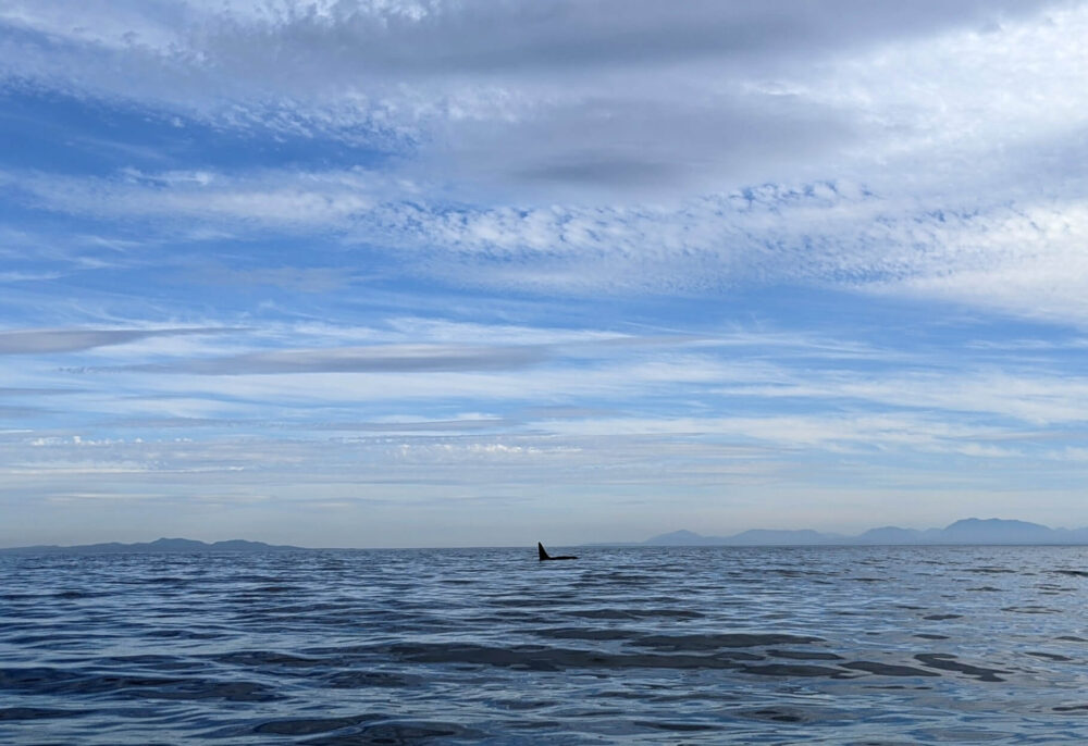 Ocean view with large orca fin rising out of water, with mountains visible in background