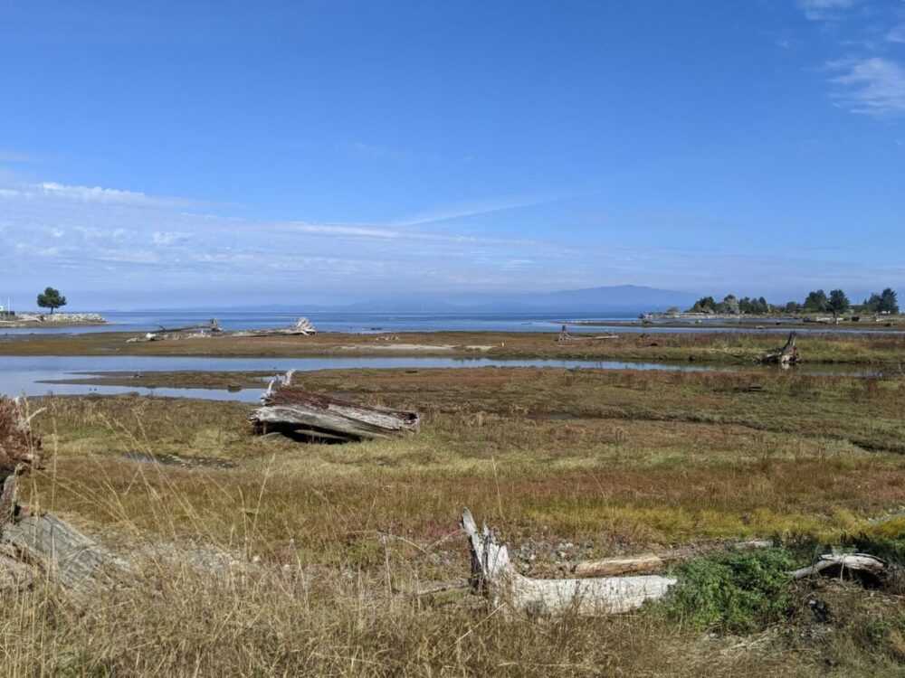 View out from Englishman River Estuary trail with driftwood, marsh area and ocean