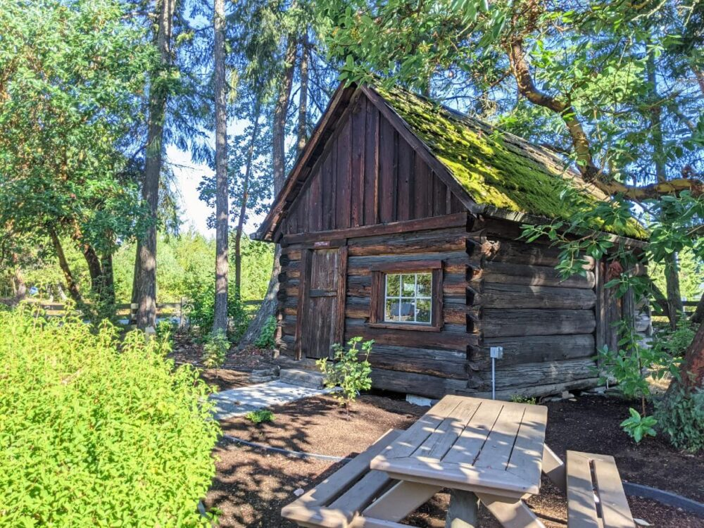 Small wooden log house with moss on roof at Parksville Museum. A picnic table sits in front of the house