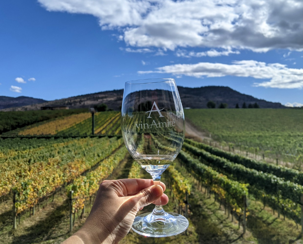 A hand holds up a VinAmité branded wine glass in front of yellowing vineyard